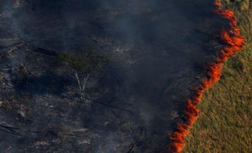 ¿Qué hay que hacer para salvar la selva amazónica?