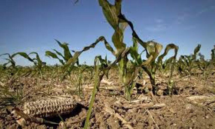 Declaran la Emergencia Agropecuaria en distritos de la Sexta Secci�n
